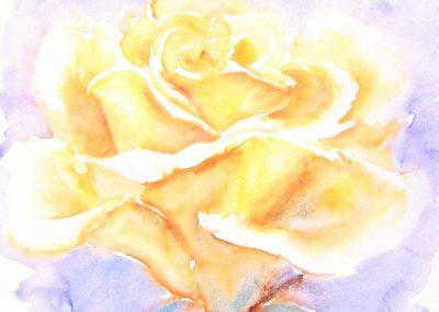 Transformatiesymbool: De Gouden Roos